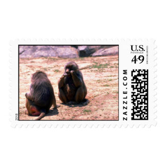 Hamadryas Baboons gnawing bark from stick Postage Stamp
