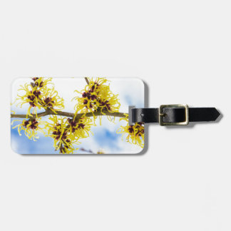 Hamamelis mollis with yellow flowers and blue sky bag tag