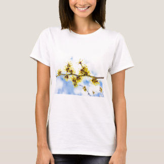 Hamamelis mollis with yellow flowers and blue sky T-Shirt
