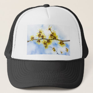 Hamamelis mollis with yellow flowers and blue sky trucker hat