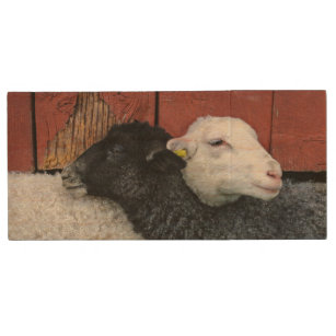 HAMbWG - USB Flash Drive - Black and White Sheep