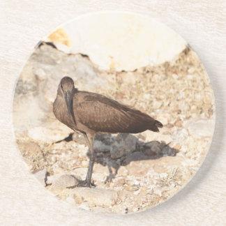 Hamerkop (Scopus umbretta) on a rock. Sandstone Coaster