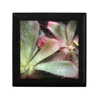 Hamilton's Sundew Plant Photo Jewelry Box