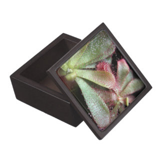 Hamilton's Sundew Plant Photo Keepsake Box