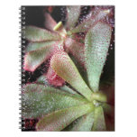 Hamilton's Sundew Plant Photo Note Books