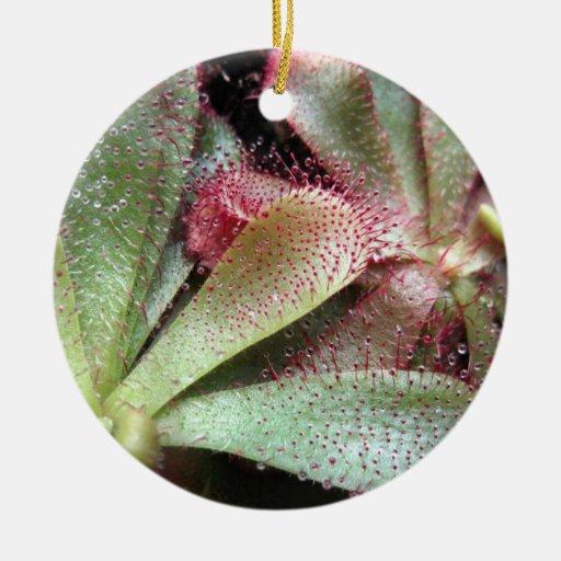 Hamilton's Sundew Plant Photo Double-Sided Ceramic Round Christmas Ornament