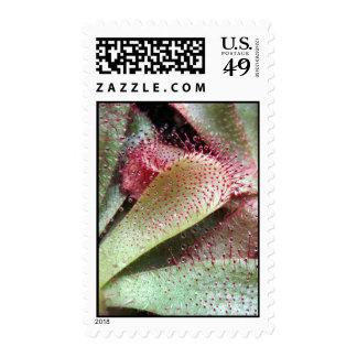 Hamilton's Sundew Plant Photo Postage Stamp