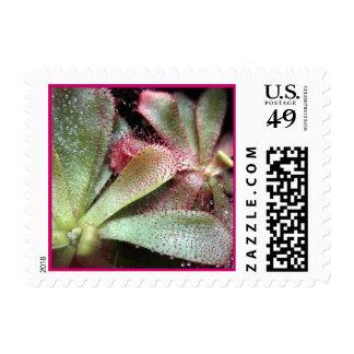 Hamilton's Sundew Plant Photo Stamps