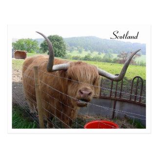Hamish el Coo melenudo Escocia Postales