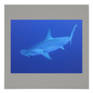 Hammerhead Shark Fish Swim Grey Gray Guy Gal Poster
