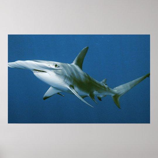 Hammerhead Shark Print