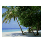 Hammock and Palm Tree Poster