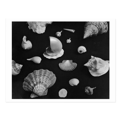 Hamptons 'Seashells' POSTCARD