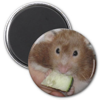 hamster 2 inch round magnet