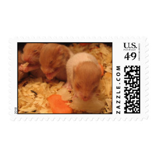Hamster Baby Photo Postage Stamp