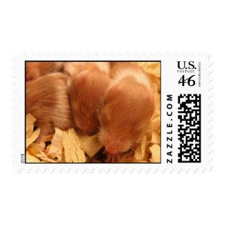 Hamster Baby Postage Stamp