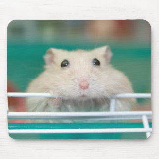 Hamster: Begging for Attention Mouse Pad