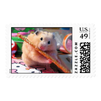 Hamster chewing postage stamp