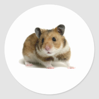 Hamster Classic Round Sticker