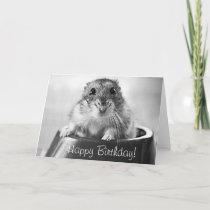 Hamster greeting card, happy birthday card