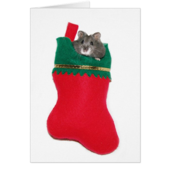 Hamster in Christmas stocking Card