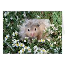 Hamster in flowers