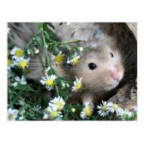 Hamster in flowers postcard