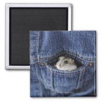 Hamster in pocket magnet