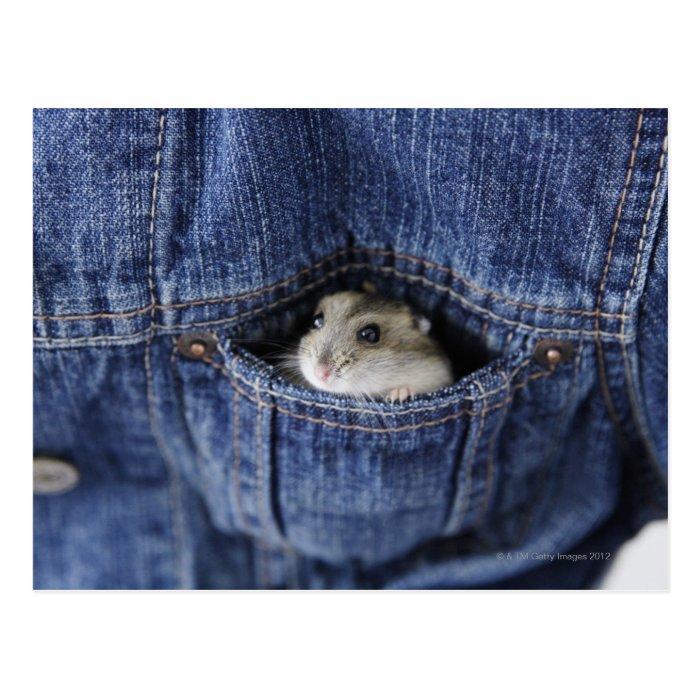 Hamster in pocket postcard