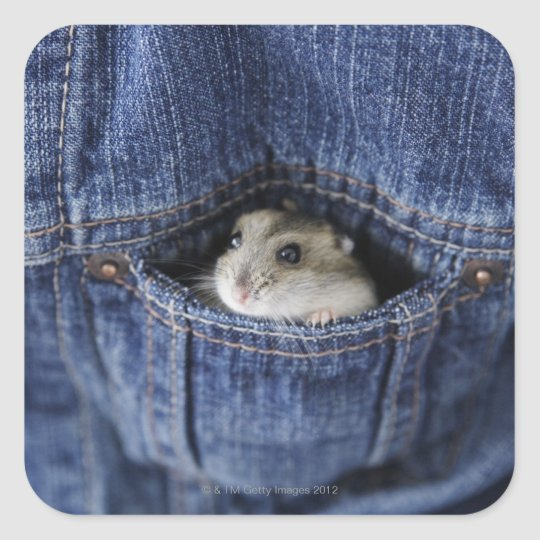 Hamster in pocket square sticker