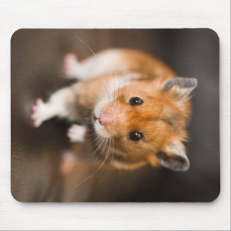 Hamster Mouse Pad