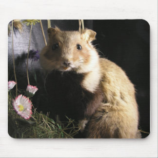 Hamster Mouse Pads