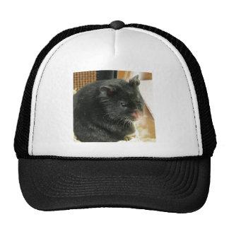 Hámster negro gorras