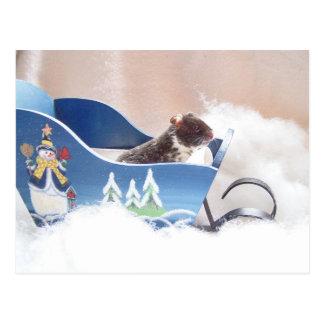 Hamster noah sledding postcards