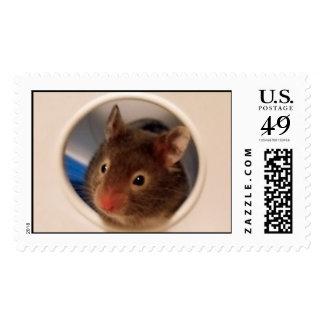 Hamster Postage
