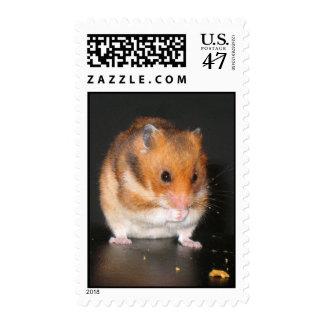 Hamster postage stamps
