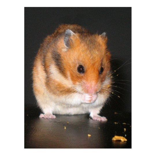 Hamster Postcards