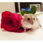 Hamster With a Rose Statuette
