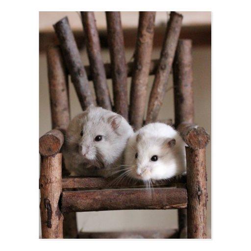 Hamsters Postcard Postal