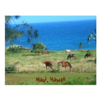 Hana Horses Postcard