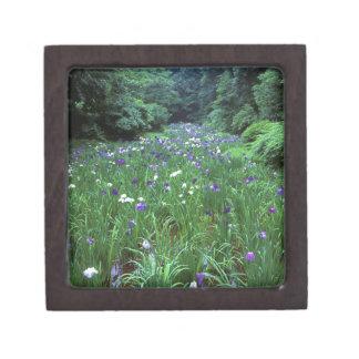 Hana Shobu (Japanese Water Iris), Meiji Shrine, Gift Box