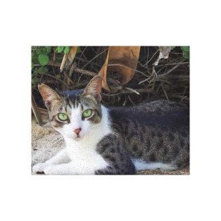 Hanauma Bay Hawaii Cat Canvas Print