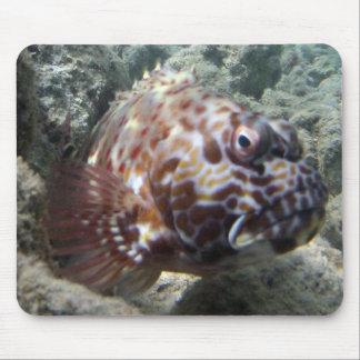 HANAUMA BAY HAWAII - Hawk Fish Mouse Pad