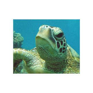 Hanauma Bay Hawaii Honu Turtle Canvas Print