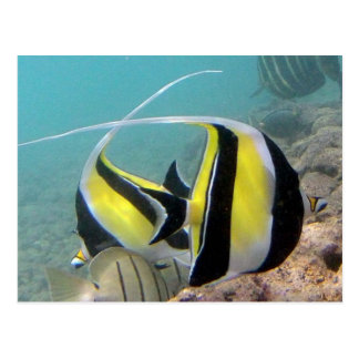 Hanauma Bay Hawaii Moorish Idol Postcard