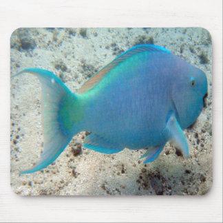 HANAUMA BAY HAWAII - Parrot Fish Mouse Pads