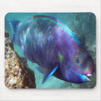 HANAUMA BAY HAWAII - Parrot Fish Mousepad