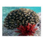 HANAUMA BAY HAWAII - Pencil Slate Sea Urchin Post Cards