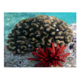 HANAUMA BAY HAWAII - Pencil Slate Sea Urchin Postcard