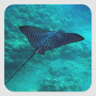 Hanauma Bay Hawaii Spotted Eagle Ray Square Sticker